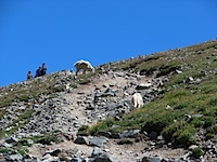 20110813-MountainGoats.jpg