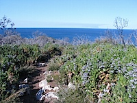 20111020-CapeNaturalisteTrail.jpg