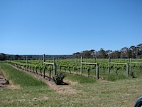 20111020-Vineyard-WindanceWinery.jpg