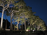 20111021-FraserAvenueGums.jpg