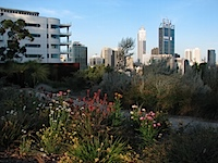 20111021-Wildflowers-PerthSkyline.jpg