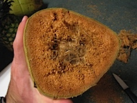 20111104-Coconut.jpg